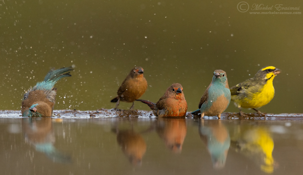 Colourful Lineup by MorkelErasmus