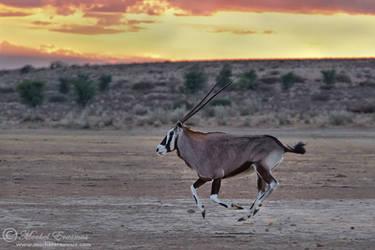 Oryx Dawn Dash by MorkelErasmus