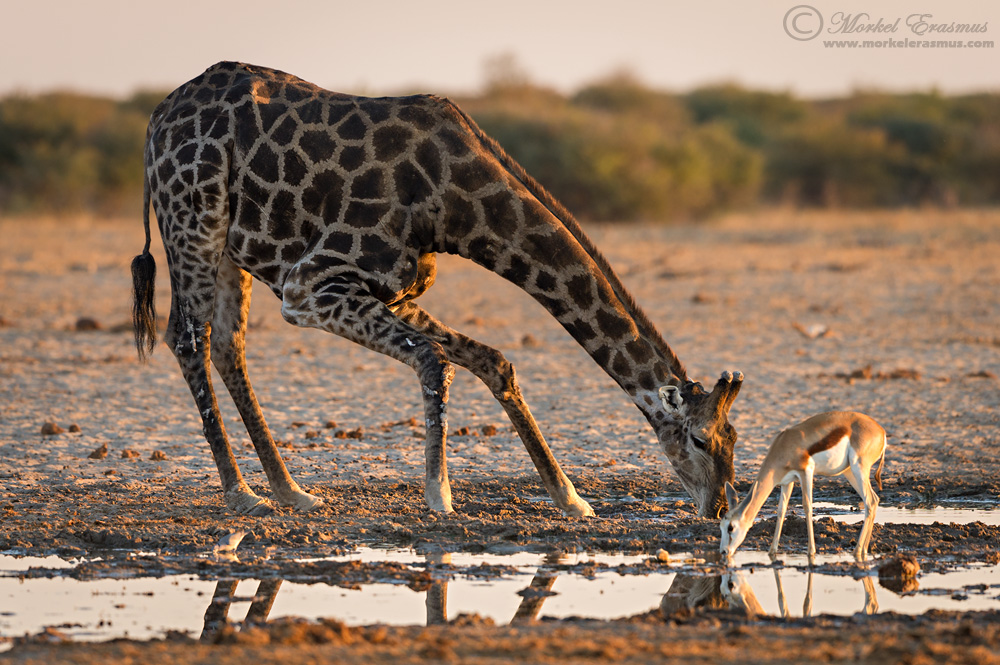 Big and Small, there's room for all by MorkelErasmus