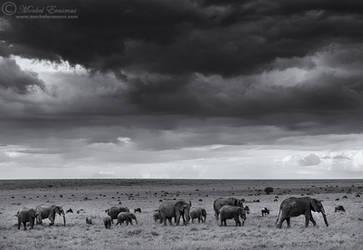 Under Elephant Skies