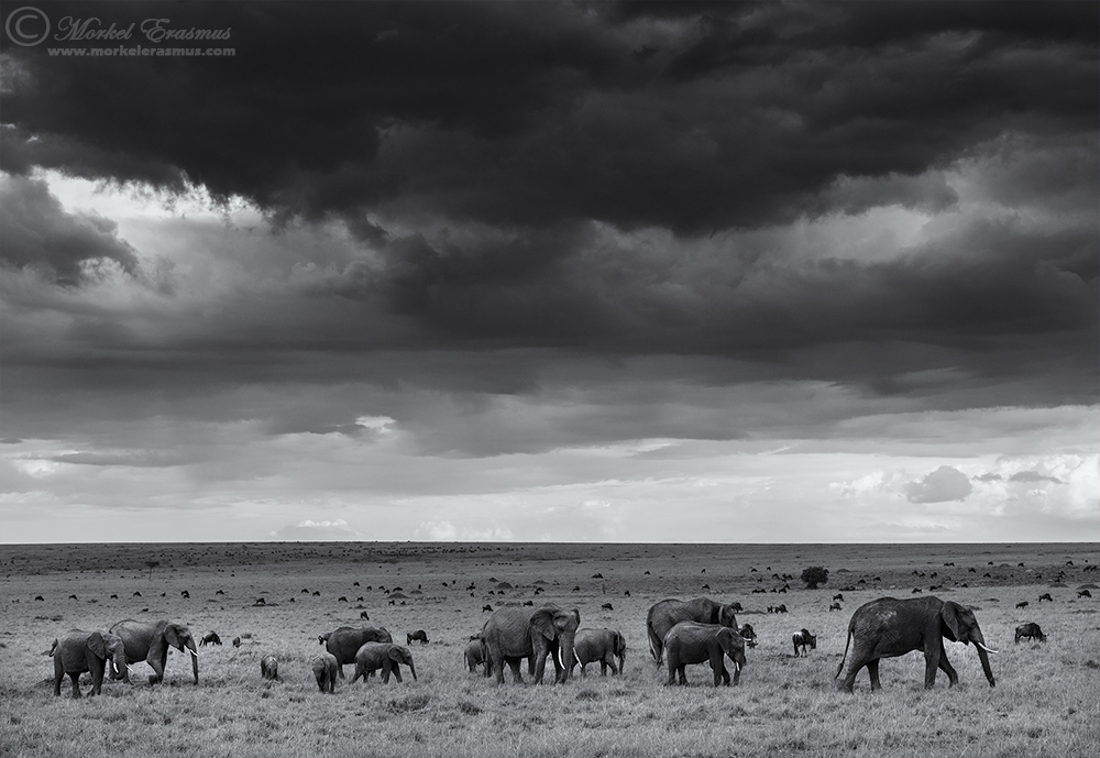 Under Elephant Skies by MorkelErasmus