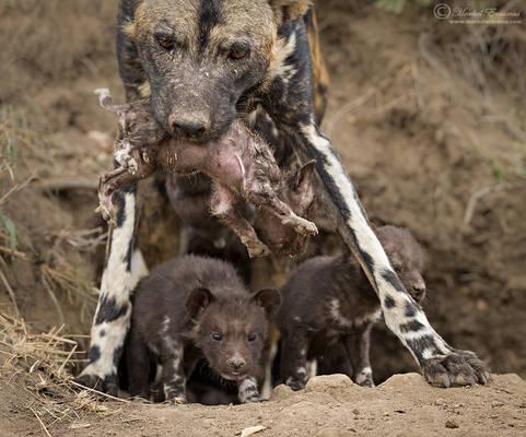 Mom's Burden