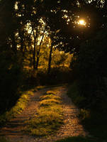 The Pathway Home by pieceyd