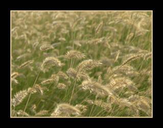 Ssss-Wheat by Alexndria