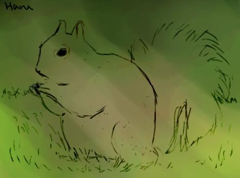 Squirrel by Harukoshi