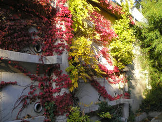 couleurs d'automne by krokette