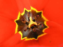 pollen by krokette