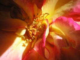 coeur de rose by krokette