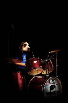 Drummer hound