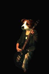 Bass Russel Terrier