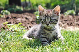 kitty by sstando