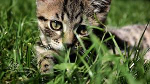 kitty 1080p