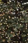 Christmas Bokeh 4
