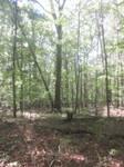 Chancellorsville Battlefield Stock 13