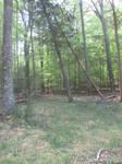 Caledon State Park Stock 44