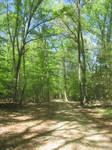 Caledon State Park Stock 45