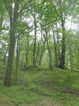 Leeslyvania State Park Stock 32