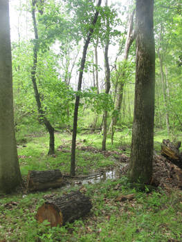 Leeslyvania State Park Stock 33