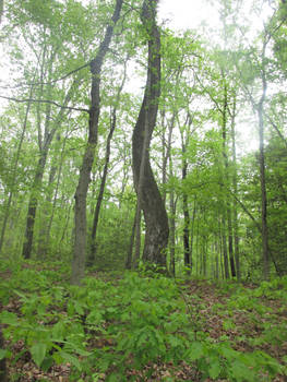 Leeslyvania State Park Stock 34
