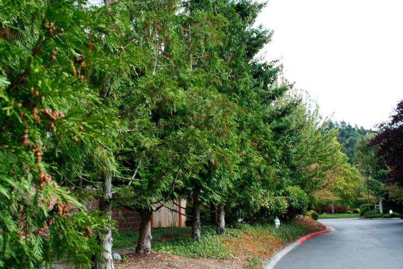 Tree Deep in Trees by krissiev