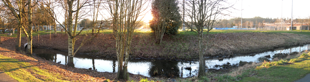 Panoramic Bothell Ditch Ducks by krissiev