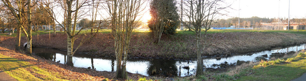 Panoramic Bothell Ditch Ducks