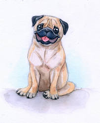 Doggust- Pug