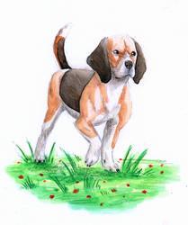 Doggust-Beagle