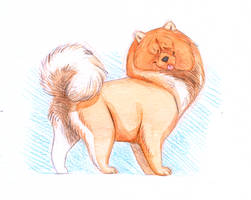 Doggust day 11-Chow Chow