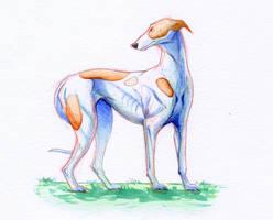 Doggust day 12-Greyhound