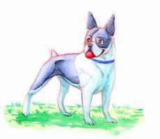 Doggust-Boston Terrier