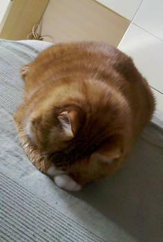 My cat: Huh...