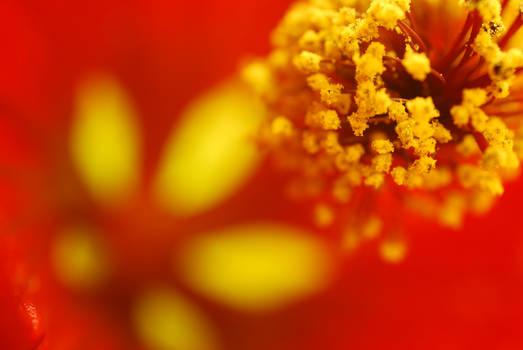 Pollenation Station