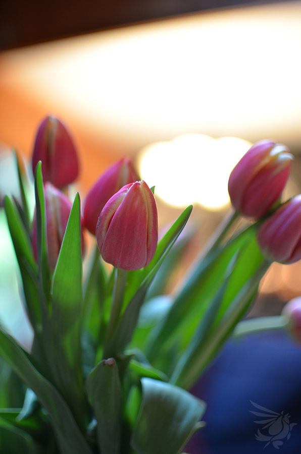 Pink Spring by calger459