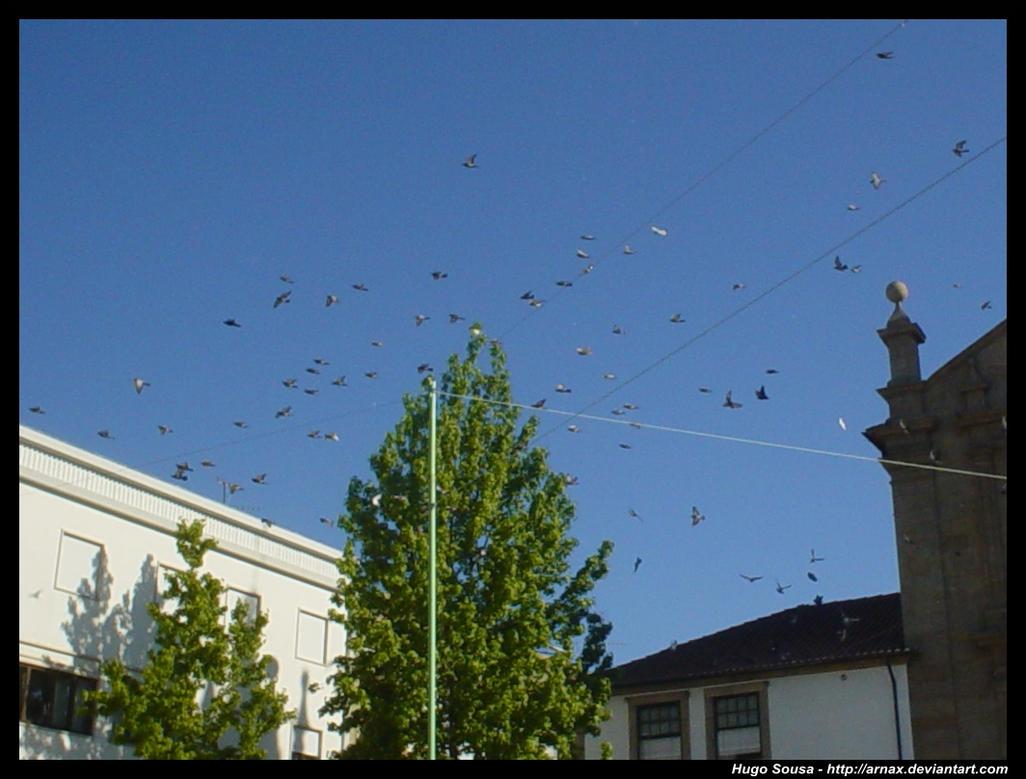 Pigeons by Arnax