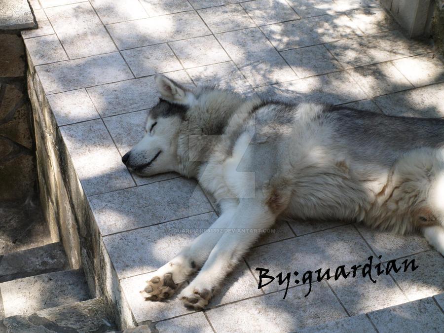 my pretty wolf by guardian98139z on deviantart
