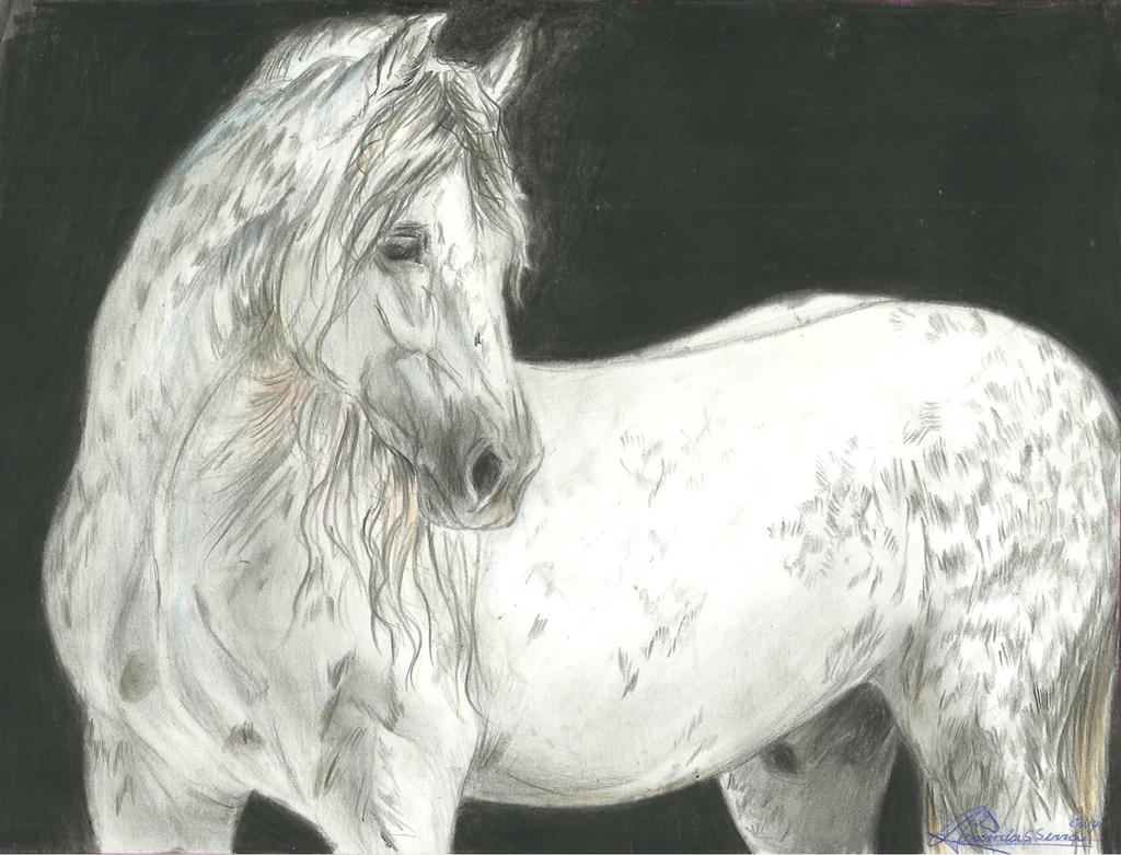 Big Gray by AmanndaSierra