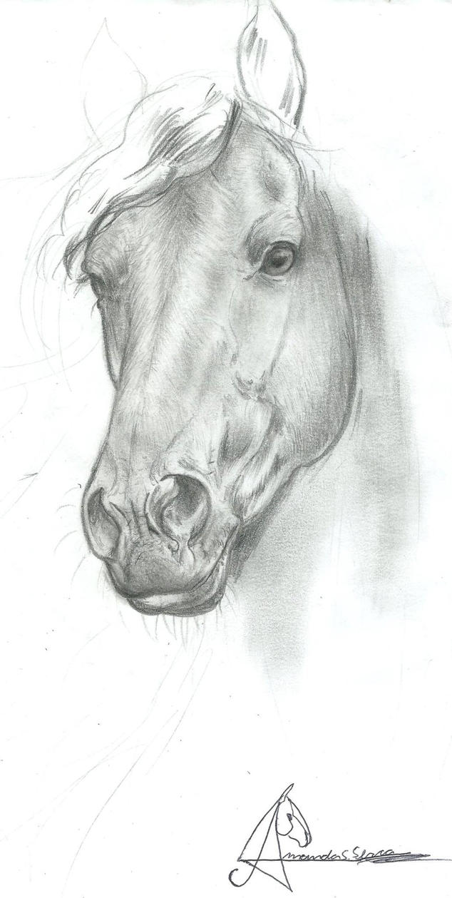 Friesian Horse - wip by AmanndaSierra