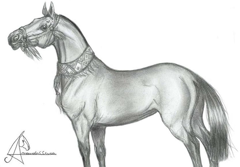 Akhal-teke horse by AmanndaSierra