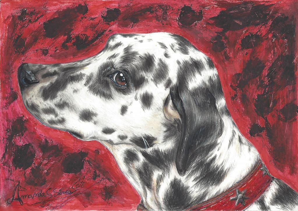 Dalmatian by AmanndaSierra