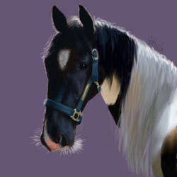 Beautiful Horse by RabbitHideaway