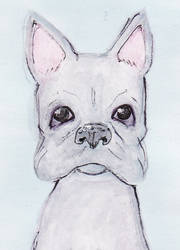 Silver Boston Terrier by heart-of-glass