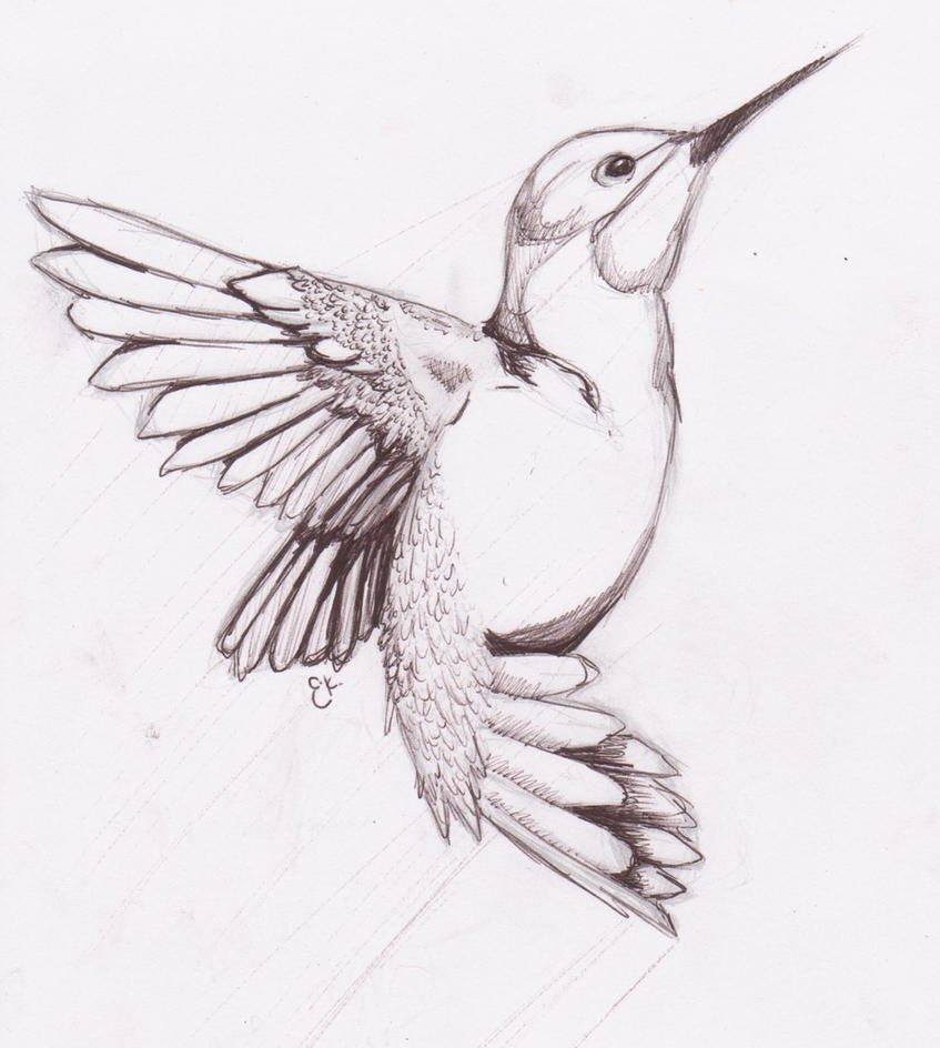 Bird Line Drawing Tattoo : Humming bird sketch by chibikitty on deviantart