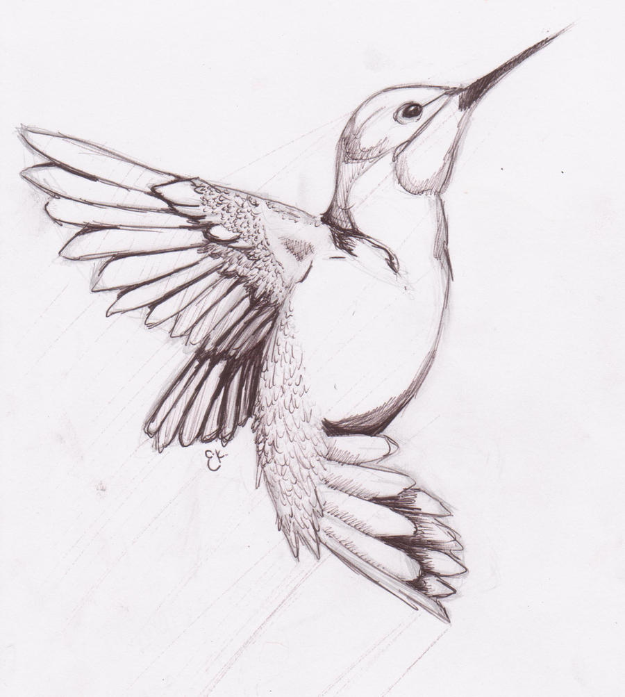 Humming Bird Sketch by chibikitty343 on DeviantArt