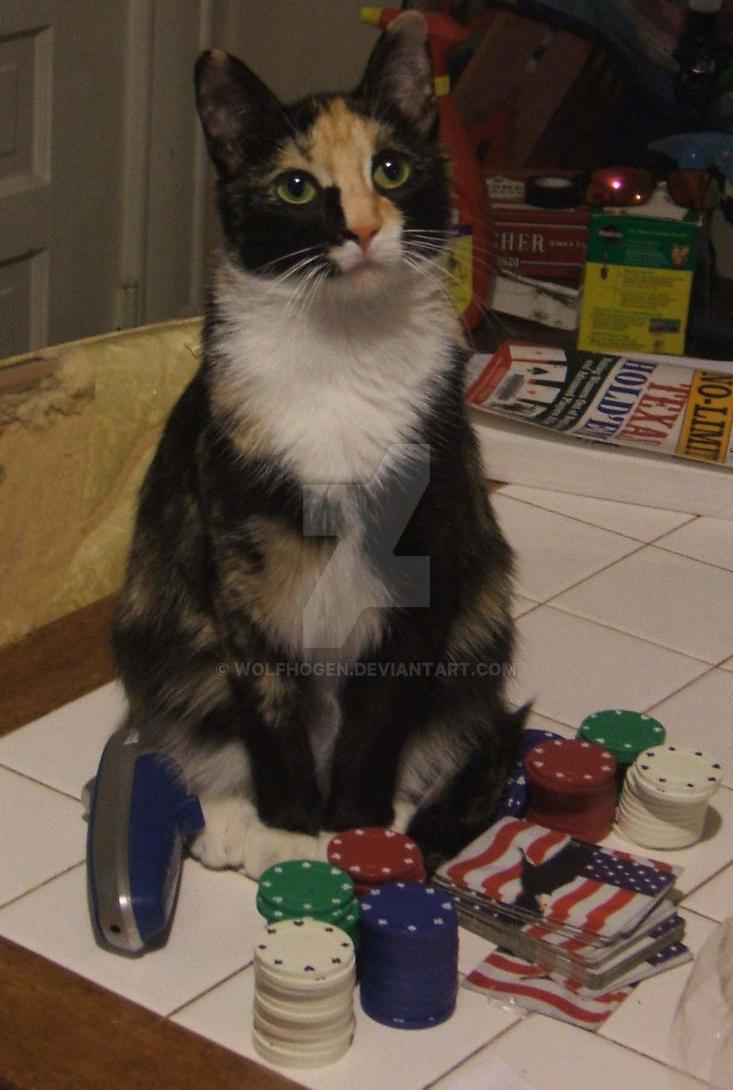 Poker Kitty by wolfhogen