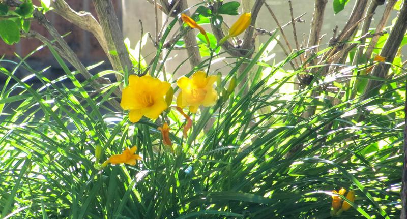 Flowers in Rapid by wolfhogen