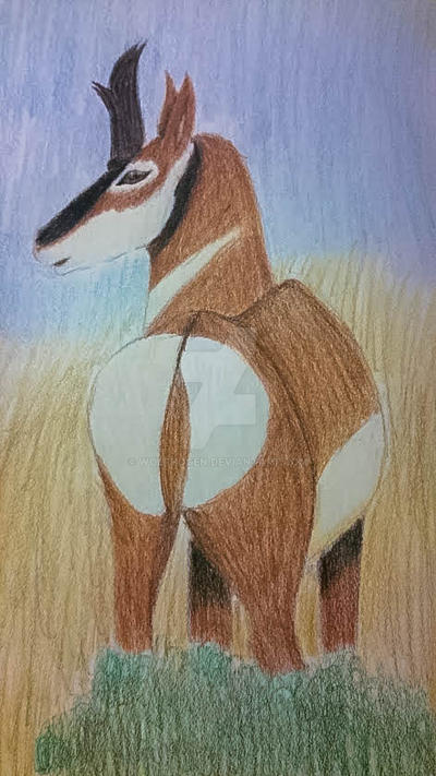 Pronghorn colored by wolfhogen