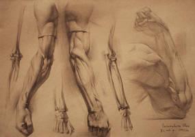 human anatomy 6