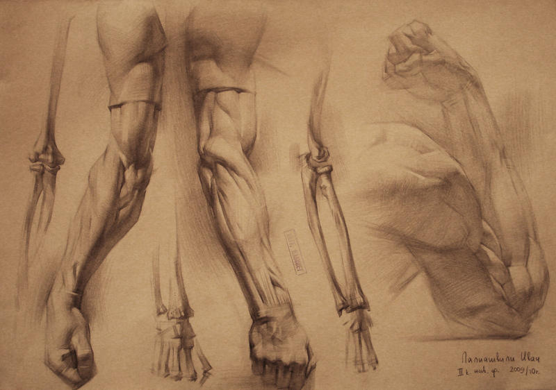 Human Anatomy 6 By Ivanlaliashvili On Deviantart