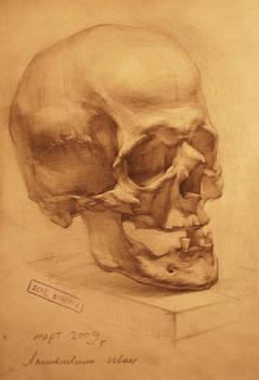 human anatomy 13